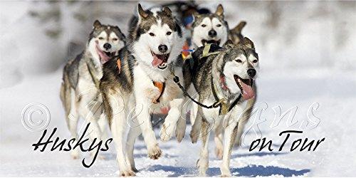 Autoaufkleber - Siberian Husky - Schlittenhunde on tour - TOP Qualität, 20x10