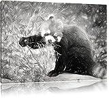 Carino Panda rosso effetto disegno a carboncino, formato: 120x80 su tela, XXL enormi immagini completamente Pagina con la barella, stampa d'arte sul murale con telaio, più economico di pittura o un dipinto a olio, non un manifesto o un banner,