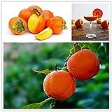 Generic Generische Persimmon Baum Samen Diospyros Kaki Obst Samen Hausgarten Bonsai Pflanzen-30 Teile/paket
