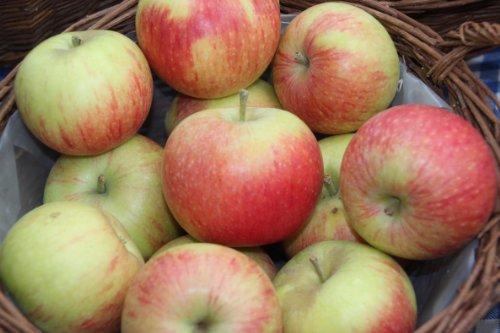 Apfel Alkmene Viertelstamm wurzelnackt, 90 cm Stammhöhe inkl. Pflanzschnitt