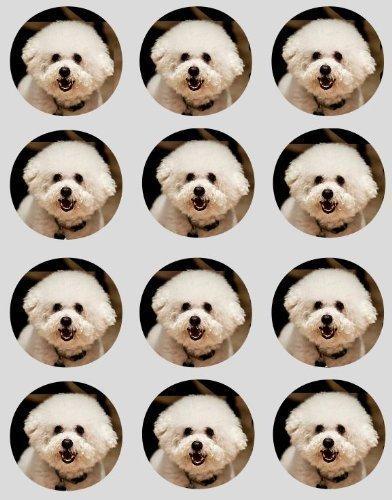 12 Bichon Frisé Hunde Design Reispapier Fee / Törtchen 40mm Toppers vorgestanzt Dekoration -