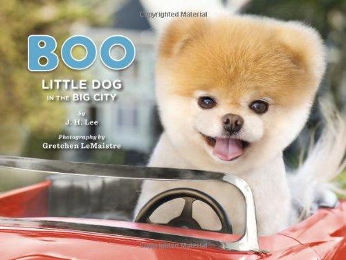 Boo: Little Dog in the Big City par J. H. Lee