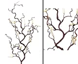 Schmaler filigraner Haselnußzweig mit 18 kleinen Kätzchen, Gesamthöhe inkl. Stiel ca. 66cm - Kunsblumen künstliche Blumen Kunstpflanzen künstliche Pflanzen Blumen