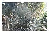 iRocket - Tappeto da Interni, Motivo Cactus at Edmonton Garden, 60 x 40 cm