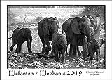 Elephants / Elefanten 2019: A3 Schwarz-Weiß-Wandkalender der faszinierenden Elefanten Afrikas. DIN A3 Querformat: 42x29 cm.