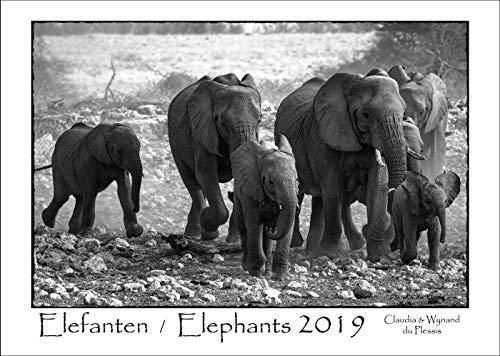 Elephants / Elefantes 2019: Calendario de pared en blanco y negro A3...