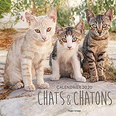 Calendrier mural Chats & Chatons 2020