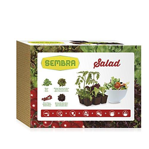 sembra-salad-kit-de-cultivo