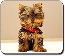 Yorki Puppy Mouse Pad