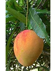 Fruit & Fruit Trees: Buy Fruit & Fruit Trees Online at Best Prices