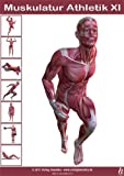 Anatomie Poster - Muskulatur Athletik XI - DIN A3