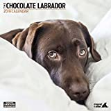 Magnet & Stahl 22.870,2cm Labrador Schokolade Modern'2019Kalender