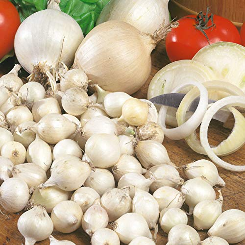 Qulista Samenhaus - Rarität Bio Steckzwiebel Snowball Weiß Früh, schossfest und sicher reifend | Gemüsesamen Mischung Winterhart mehrjährig