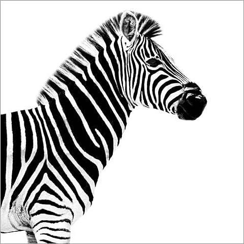 Stampa su tela 40 x 40 cm: Safari Profile Collection - Zebra White Edition II di Philippe HUGONNARD - poster pronti, foto su telaio, foto su vera tela, stampa su tela