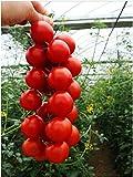 AGROBITS 100PCsVegable Frutta Red String Pomodoro Tutto Casa e Giardino