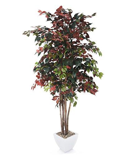 closer2nature Künstliche 7ft 5,1cm Zimt Baum–Portofino Übertopf nicht im Lieferumfang enthalten (Ceylon-zimt-pflanze)