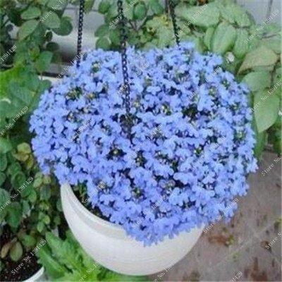 Bleu Fleur de Lin Graine vivace Fleur Graine Quatre Saisons Fleur plantes ornementales tropicales en plein air Bonsai Lin Semilla 100 Pcs 5