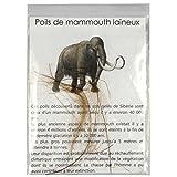 Naturosphère - Minéraux et fossiles C21 - Brins de Poils de mammouth laineux...