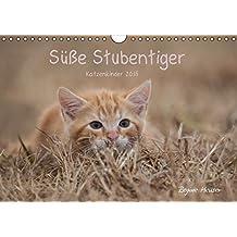 Süße Stubentiger - Katzenkinder (Wandkalender 2015 DIN A4 quer): Katzenkinder 2015 (Monatskalender, 14 Seiten)
