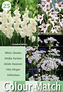 Colour Collection Summer Bulbs - White (Pack of 25)