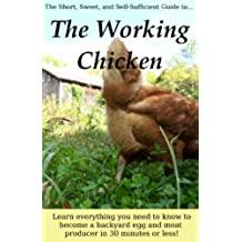 The Working Chicken: Learn everything you need to know to become a backyard egg and meat producer in 30 minutes or less! (English Edition)