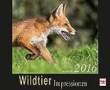 Wildtier Impressionen 2016 (Kalender)
