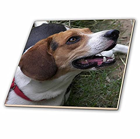 3dRose ct_20095_1 Beagle Ceramic Tile, 4