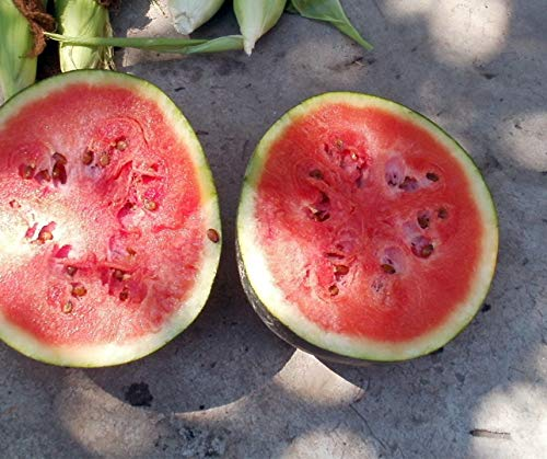 Bobby-Seeds Melonensamen Blacktail Mountain Wassermelone 50 Korn