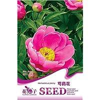 (Orden de la mezcla mínima de 5) 1 paquete de 6 piezas originales semillas, semillas de peonía herbáceas, rojo Paeonia lactiflora semilla de rosa libre del envío A155