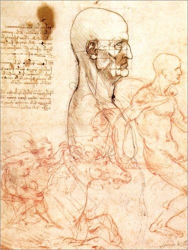 Posterlounge Alu Dibond 120 x 160 cm: Torso eines Mannes im Profil von Leonardo da Vinci