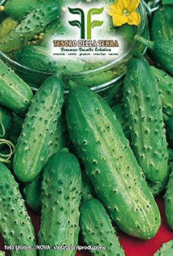 150 aprox – Kleine Gurkensamen aus Paris Sel – Foggianello – Cucumis Sativus In Originalverpackung Hergestellt in Italien – Kleine Gurken