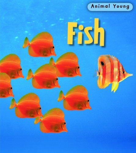 Fish (Animal Young) -