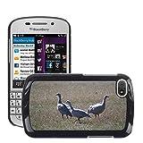 Grand Phone Cases Bild Hart Handy Schwarz Schutz Case Cover Schale Etui // M00141005 Cape Barren Gänse Gänse Tier // BlackBerry Q10