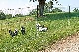 AKO Hühnernetz Geflügelnetz, Elektronetz grün, 112cm Doppelspitze - 50m - Hühner, Gänse, Puten, Geflügel - Kleine Maschenweite im Unteren Bereich