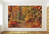 Vlies Fototapete Fototapeten Tapete Tapeten Wandbild Wald im Herbst 4-002VE