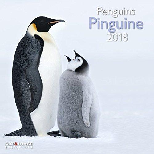 Pinguine 2018 - Tierkalender, Wandkalender wilde Tiere, Antarktis  -  30 x 30 cm