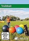 Treibball: Spiel, Sport und Spaß für Familienhunde