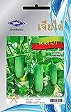 Plantree 1 paquete: 55 semillas de pepino Hogar tailandés Huerto Fibra vegetal Salud Planta Chia Tai Health