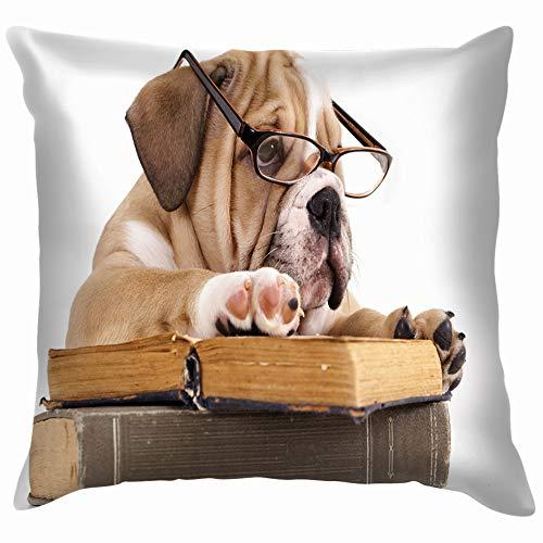 beautiful& Purebred English Bulldog Glasses Book Animals Wildlife Animal Transportation Funny Square Throw Pillow Cases Cushion Cover for Bedroom Living Room Decorative 18X18 Inch (Eine Dance Ideen Halloween-school Für)