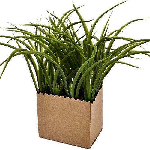 Gras, Pflanzen (Pflanze Gras in Papiertopf Kunstblume 27x13x7cm grün Kunstpflanze)