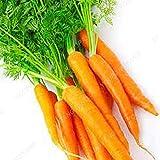 Un paquete de 300 semillas de zanahoria buen sabor legumbres bonito color de la fruta Semillas de alta germinación para bricojardín Planta de Semillas púrpura