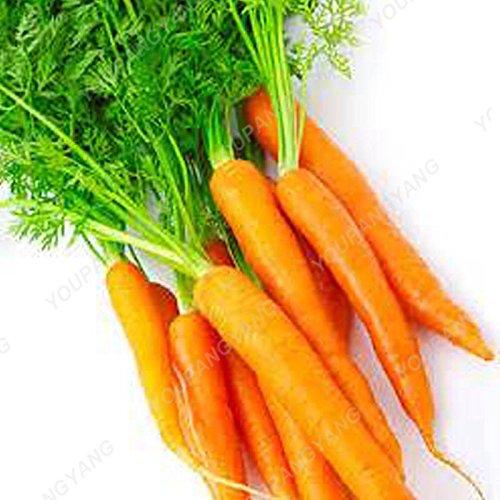 100pcs / sac carotte Graines Heirloom Bio Graines Légumes Fruit très Graines long ginseng carotte Plante en pot pour jardin Violet