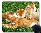 Gaming-Mäusematte, Kätzchen-Tierkatzen-Mauspad, Mäusematte für Computer cat142