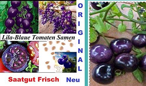 30x-lila-blaue-tomaten-samen-tomatensamen-hingucker-pflanze-raritat-essbar-lecker-tomate-saatgut-gem