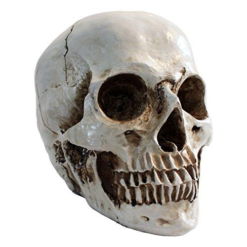 Kurtzy modello cranio umano riproduzione cranio scheletro decorazione - cranio realistico in resina grandezza naturale per casa, decorazioni gotiche, giorno dei morti e halloween