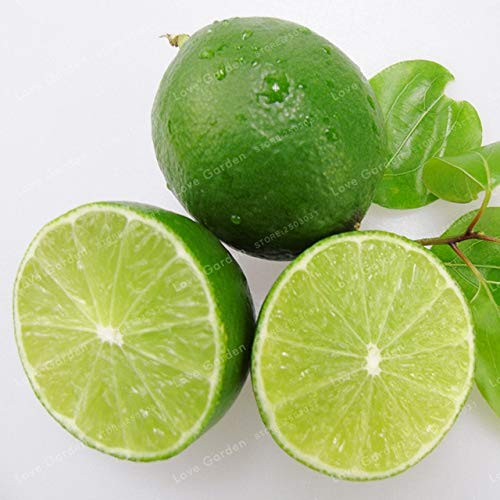 AGROBITS 30 Stück Zitrone Bonsai Frische Entsaften Essbare Gesunde Exotische schnell wachsend limon Obstbaum Bonsai Topf: 2