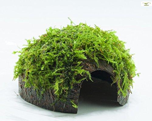 Garnelio - Moos Höhle / Coco Shell - Kokosnuss mit XMAS Aquarienmoos bewachsen / Höhle Aquarium Deko (Aquarium Versteck)