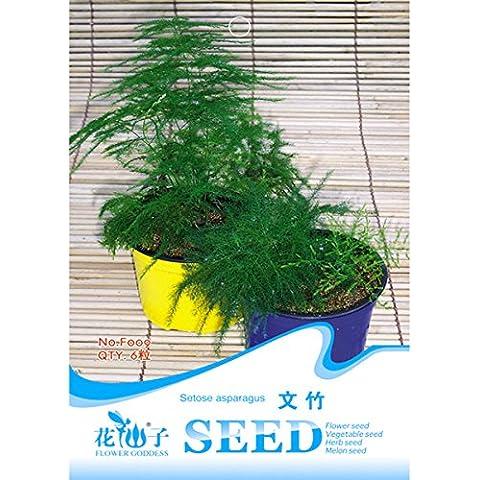 Bluelover 6 semi particelle asparagi felce semi di piante di bambù piccolo asparagi glabra