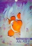 Faszination am Riff (Wandkalender 2014 DIN A4 hoch): Bunte Unterwasserwelt (Monatskalender, 14 Seiten)