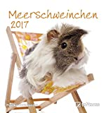Meerschweinchen 2017 - Tierkalender, Postkartenkalender, Kalender für Kinder - 16 x 17 cm